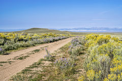 Ranch road with wildflowers Royalty Free Stock Images