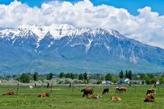 Ranch in Utah stockfotos