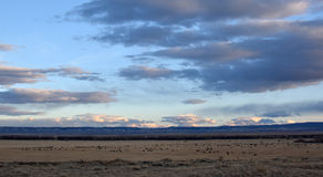Ranchen Arkivbilder