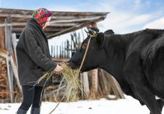 Rancher in casual  winter clothesin  stands  with Royalty Free Stock Photos