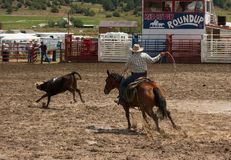 A Rancher competing at a rodeo in colorado Royalty Free Stock Photo