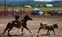 A Rancher competing at a rodeo in colorado Stock Image