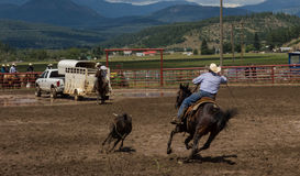 A Rancher competing at a rodeo in colorado Stock Photo
