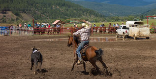 A Rancher competing at a rodeo in colorado Stock Photography