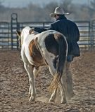 Rancher with horse in paddock Stock Photos