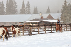 Rancher pushing the horse herd out to hay Royalty Free Stock Photos