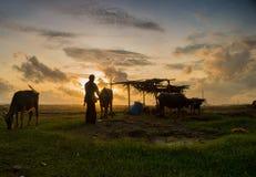 Ranchero del búfalo Foto de archivo libre de regalías
