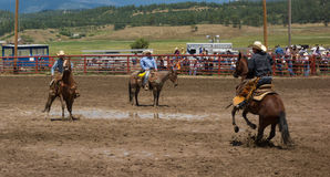 Ranchers competing at a rodeo in colorado Stock Photography