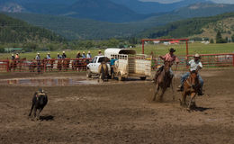 Ranchers competing at a rodeo in colorado Royalty Free Stock Photos