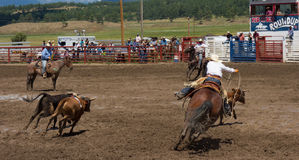 Ranchers competing at a rodeo in colorado Stock Images