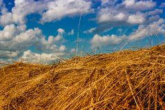 Ranches of hay in a meadow Stock Photography