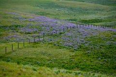 ranchland野花 库存图片