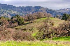 Rancho Canadá De Oro Imagens de Stock