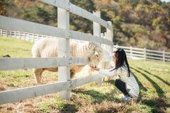 Rancho de alimentación de las ovejas de la muchacha feliz Imagen de archivo libre de regalías