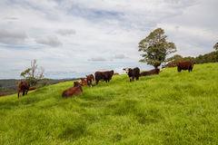 Rancho de gado de Queensland Foto de Stock Royalty Free