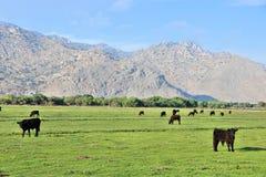 Rancho de ganado de California Fotos de archivo