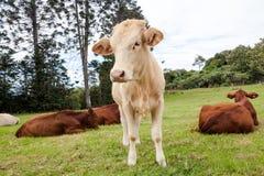 Rancho de ganado de Queensland Fotos de archivo libres de regalías