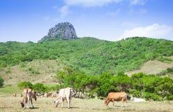 Rancho de la montaña de Dajianshan Fotografía de archivo