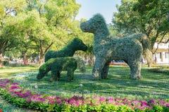 Rancho do cavalo de Houli do mundo Flora Exposition de Taichung imagem de stock royalty free