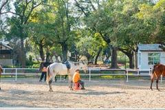 Rancho do cavalo de Houli do mundo Flora Exposition de Taichung foto de stock royalty free