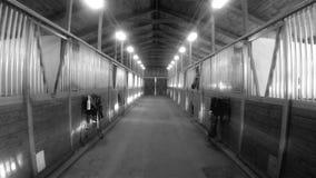 Rancho ecuestre del prado animal del deporte del granero de caballo que compite con el establo