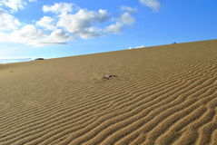 Rancho Guadalupe Dunes Preserve Royalty Free Stock Images