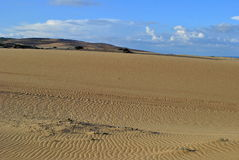 Rancho Guadalupe Dunes Preserve Royalty Free Stock Photo