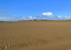 Rancho Guadalupe Dunes Preserve Royalty Free Stock Image