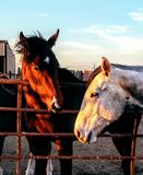 Rancho konie Zdjęcia Stock
