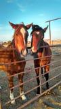 Rancho konie Fotografia Stock