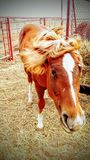 Rancho konie Obraz Royalty Free
