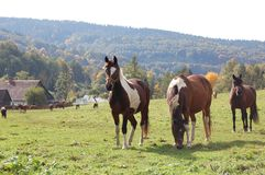 Rancho-m Imagem de Stock Royalty Free