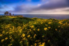 Rancho Palos Verdes Super Bloom lizenzfreie stockbilder