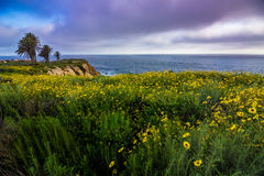 Rancho Palos Verdes Super Bloom Imagem de Stock Royalty Free