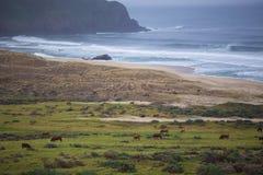 Rancho pelo mar Imagens de Stock