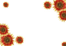 Rand, Blumen Stockfotografie