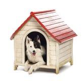 Rand-Collie in einer Hundehütte Lizenzfreie Stockfotografie