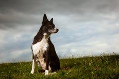 Rand-Collie mit drastischem Himmel lizenzfreie stockfotografie