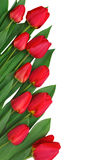 Rand der Blumen des roten Frühlinges Stockfoto