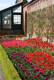 Rand der Tulpen Lizenzfreie Stockfotos