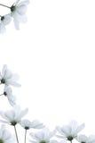 Rand der weißen Blumen Stockfotografie