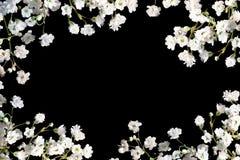 Rand des Atems des Schätzchens auf Schwarzem. Stockbilder