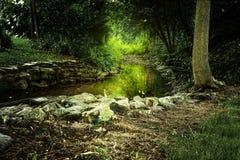 Rand des Stromes mit glühendem grünem gelbem Sun-Glänzen Lizenzfreies Stockbild