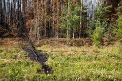 Rand des Waldbrands und des niedergeworfenen Baums Lizenzfreie Stockfotografie