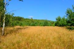 Rand des Waldes Lizenzfreies Stockfoto
