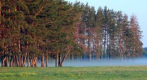Am Rand des Waldes Stockfoto