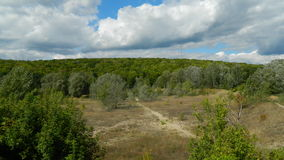 Rand des Waldes lizenzfreie stockfotos