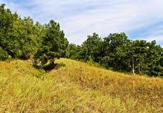 Rand des Waldes auf einem Abhang Stockbilder