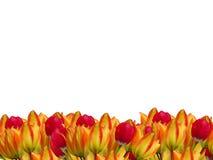 Rand mit drei Blumen Lizenzfreie Stockbilder