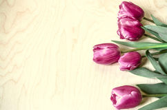 Rand op licht triplex als achtergrond met bloemen purples tulpen royalty-vrije stock afbeeldingen